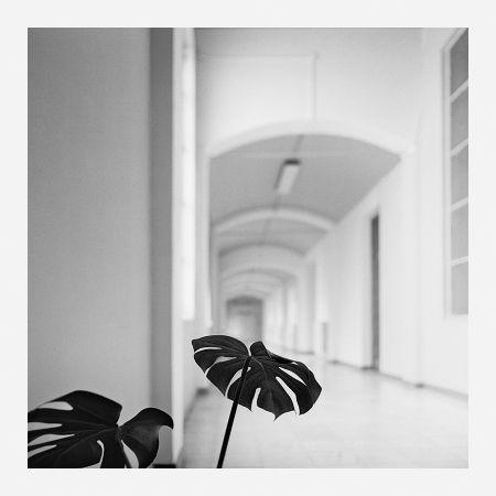 Photography Canovas - ACHING PLANTS - 2