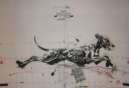 Lithograph Velickovic - Animals in motion