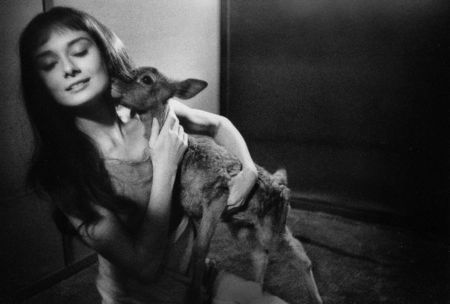 Photography Willoughby - Audrey Hepburn and deer