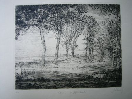 Drypoint Cissarz - Bäume an der Föhrer Marsch