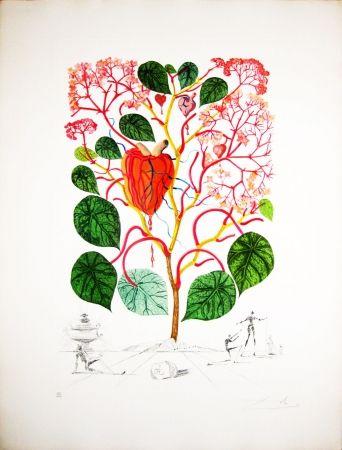 Etching Dali - Begonia
