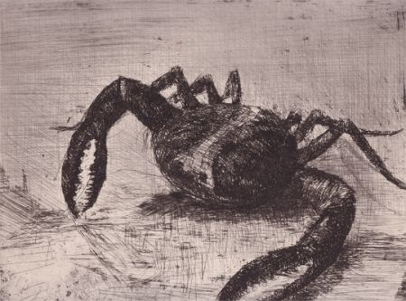 Illustrated Book Zamorano De Biedma - Bestiaire