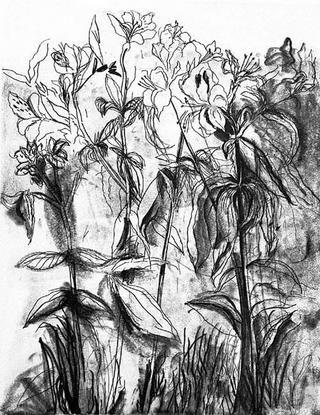 Etching Dine - Black & White Flowers IV