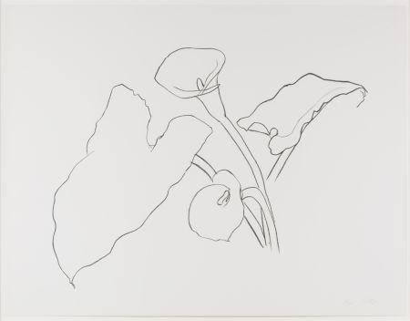 Lithograph Kelly - Calla Lily I