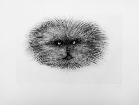 Drypoint D'ho - Chat gris