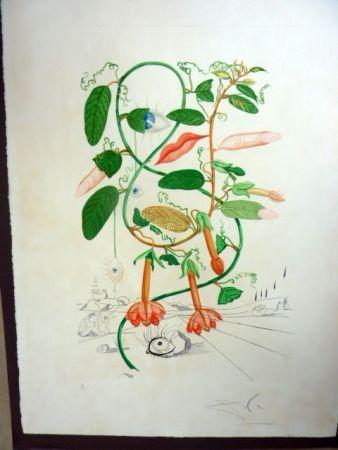 Multiple Dali - Cobea (Pisum Sensuale)