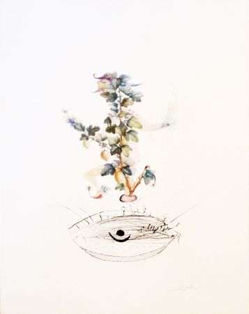 Lithograph Dali - Curtsying Gooseberry Bush
