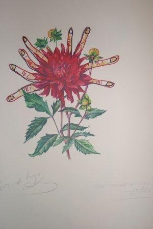Lithograph Dali - Dahlias of Dalí (surrealistic flowers)