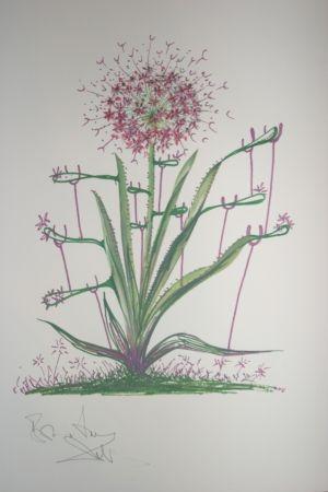Lithograph Dali -  Desert Cactus (surrealistic flowers)