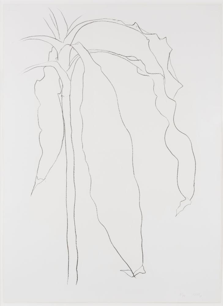 Lithograph Kelly - Dracena I