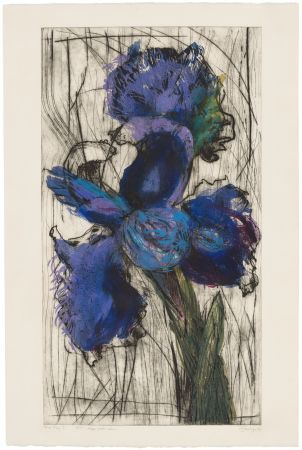 Etching And Aquatint Kentridge - Dutch Iris (Trial Proof B)