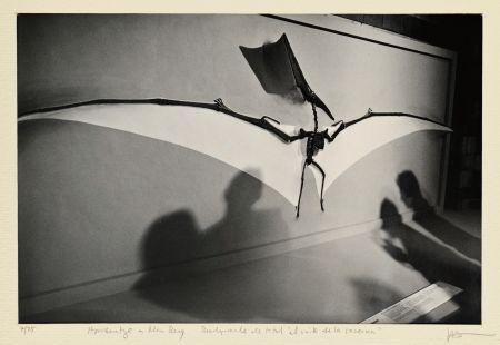 Photography Fontcuberta - El mite de la caverna