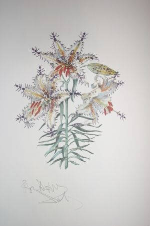 Lithograph Dali - Erotic Lily (surrealistic flowers)