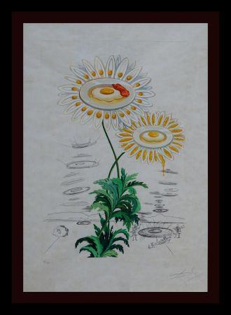 Etching Dali - Flora Dalinae Chrysanthemum