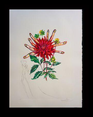 Etching Dali - Florals Dahlia Venus