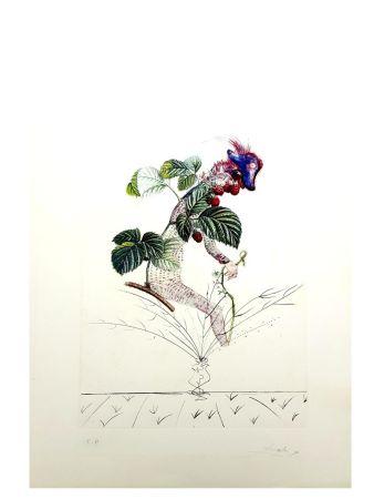 Lithograph Dali - Flordali - Framboise