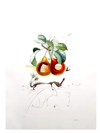 Lithograph Dali - Flordali - Fruits Troués