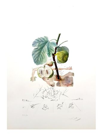Lithograph Dali - Flordali - Homme Figuier