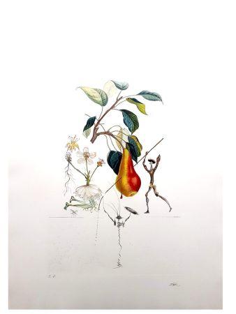 Lithograph Dali - Flordali - Poire de Don Quichotte