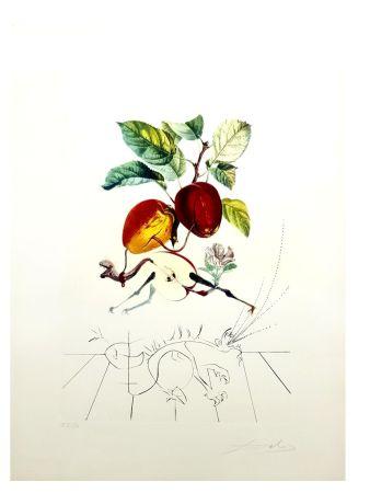 Lithograph Dali - Flordali - Pomme au Dragon