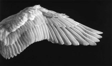 Photography Longo - Gabriel's Wing