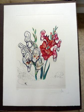 Drypoint Dali - Gladiolas Plus Ears (Florals Suite)