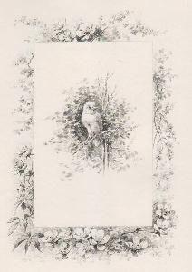 Illustrated Book Giacomelli - Histoire d'un merle blanc. Compositions de Hector Giacomelli gravées à l'eau-forte par L. Buisson.