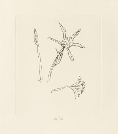 Etching Flanagan - Ibiza Meadow Flower