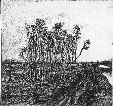 Engraving Bozzetti - Il boschetto lungo l'argine (II versione)