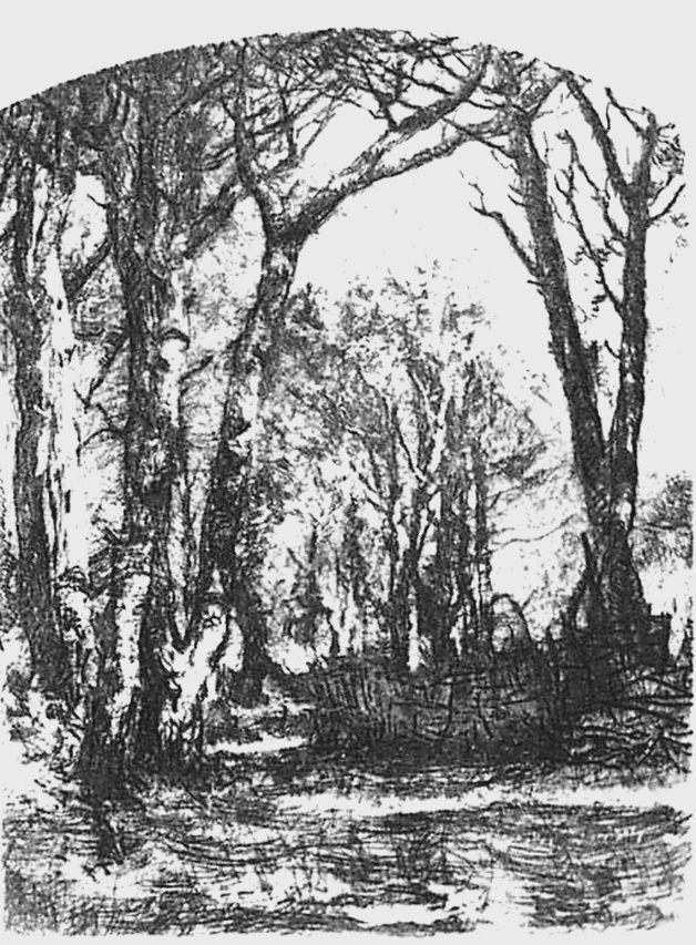 Engraving Bianchi - Il bosco
