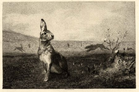 Etching Bracquemond - La lièvre (The Hare)