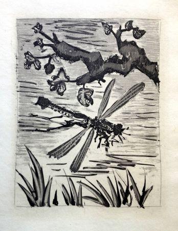 Etching And Aquatint Picasso - LA LIBELLULE