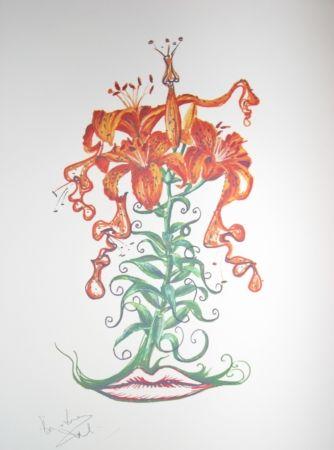 Lithograph Dali - Lilium aurancacium (surrealistic flowers)