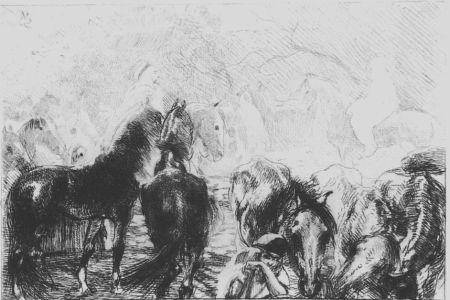 Engraving Besnard - Marché aux chevaux a Mainson Carré - Algérie