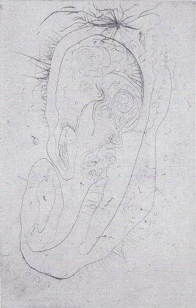 Illustrated Book Wols - Naturelles