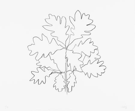 Lithograph Kelly - Oak VI