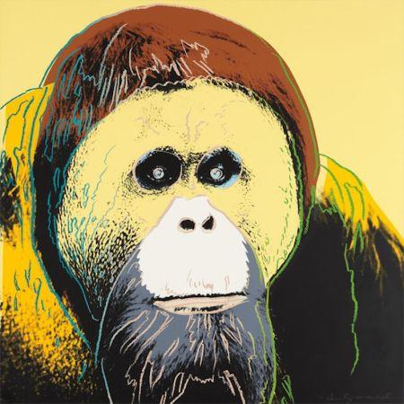 Screenprint Warhol - Orangutan