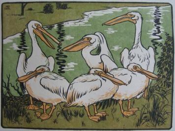 Woodcut Berthold - Pelikane