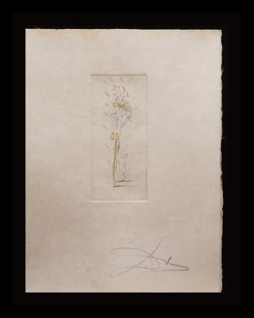 Etching Dali - Petites Nus (from Apollinare) D