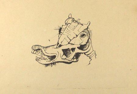 Lithograph Hofer - Pferdeschädel / Horse Skull