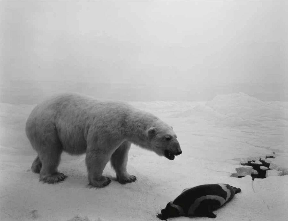 Lithograph Sugimoto - Polar Bear