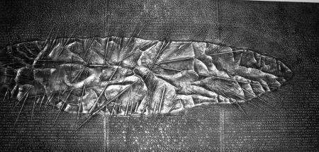 Illustrated Book Pomodoro - Sette frammenti da l'Arte dell'uomo primordiale