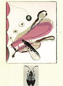 Lithograph Brown - Souvenirs entomologiques 6