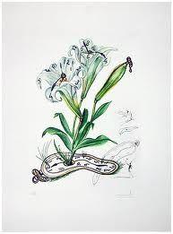 Drypoint Dali - Surrealistic Flowers, 540, Lilium longiflorum vel tempus