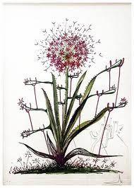 Drypoint Dali - Surrealistic Flowers, 543, Allium chrisophi pilique pubescentes