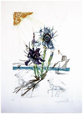 Drypoint Dali - Surrealistic Flowers, 544, Iris germanica cum ocellis italicis