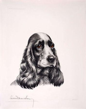 Engraving Danchin - Tête de Cocker femelle - Black and white Cocker Spaniel head