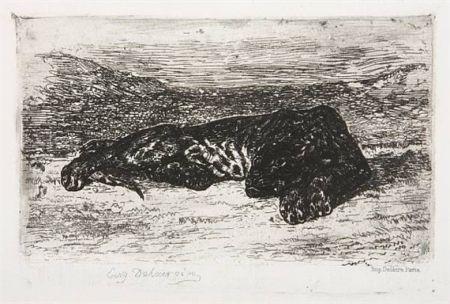 Etching Delacroix - Tigre couché dans le désert