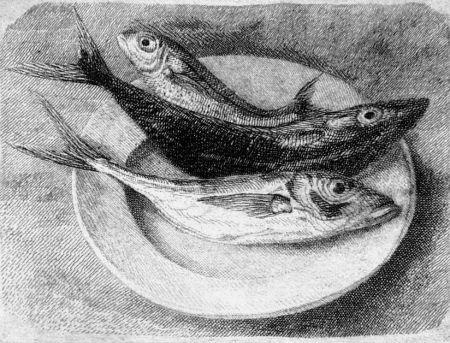 Engraving Mongatti - Tre pesci dell'Adriatico