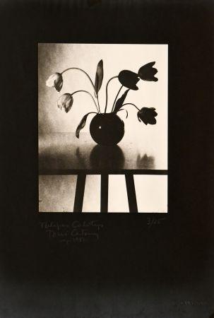 Photography Catany - Tulipes